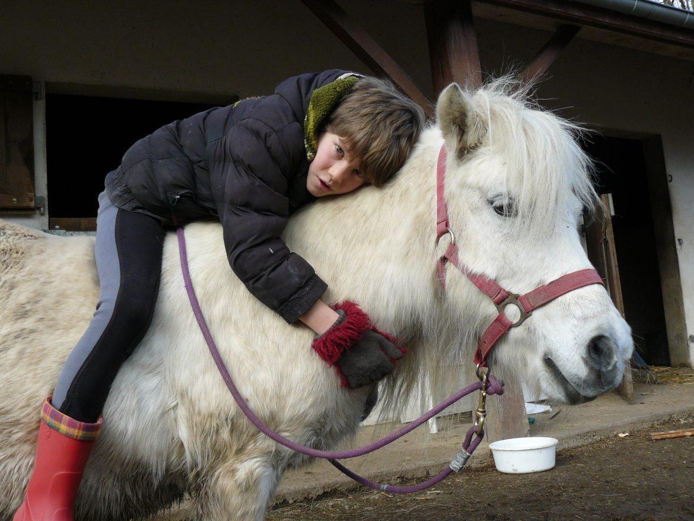Thérapie avec le cheval (2)