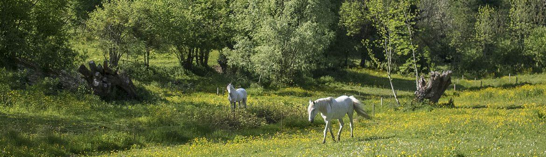Chevaux-Blancs-1800x500