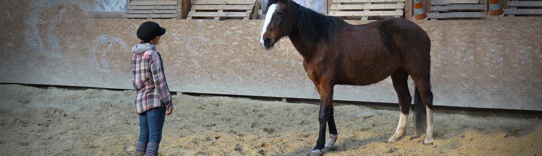 Equitation-sensitive-1170x338